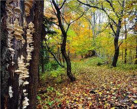 Las liściasty w Górach Bystrzyckich